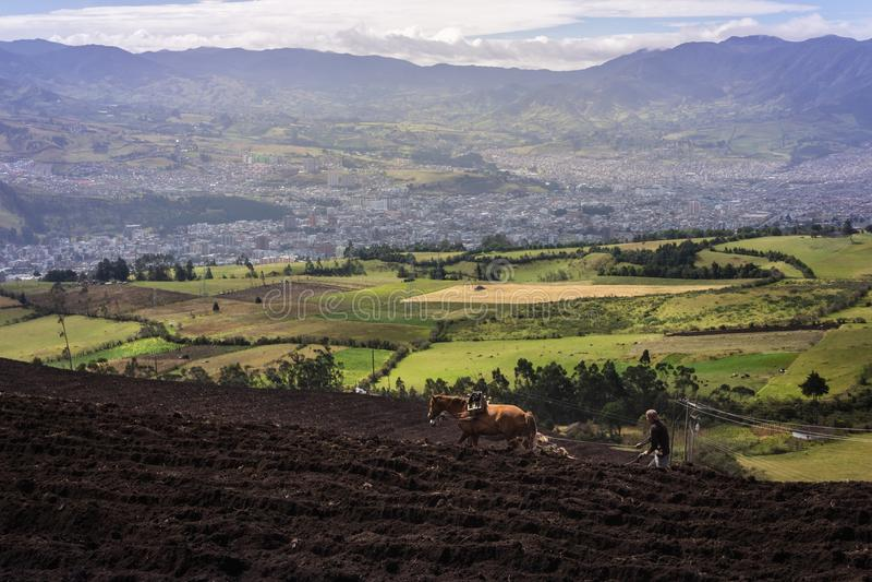 Man who plows the field near to San Juan de Pasto. stock photos