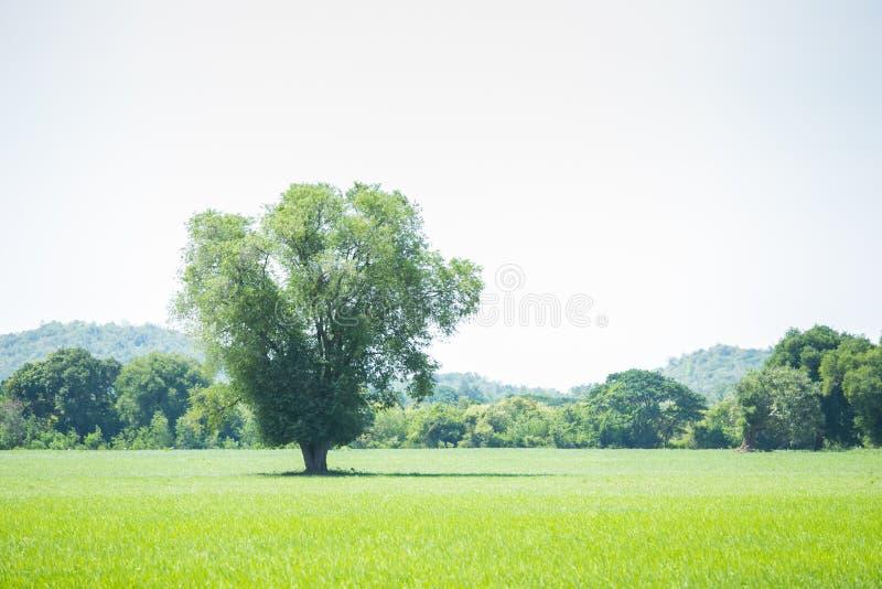 Pasto verde bonito SK azul imagens de stock royalty free