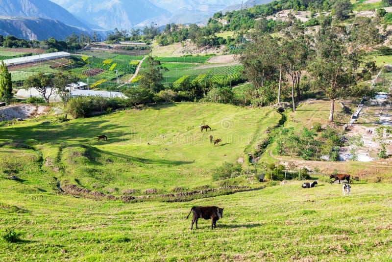 Pasto verde cerca de Quito, Ecuador imagenes de archivo