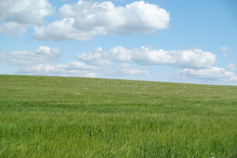 Pasto verde con el cielo azul   foto de archivo libre de regalías