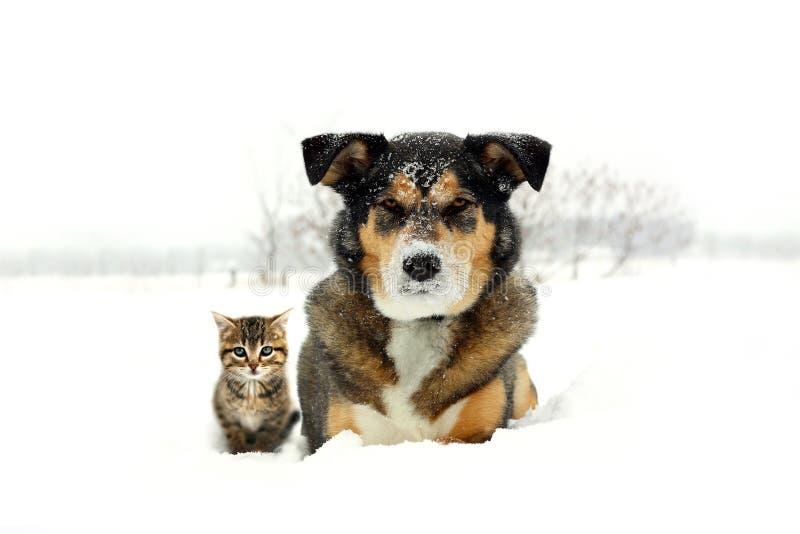 Pastor alemão Dog e cinza e laranja Tabby Cat Kitten Friends Laying na neve imagem de stock royalty free