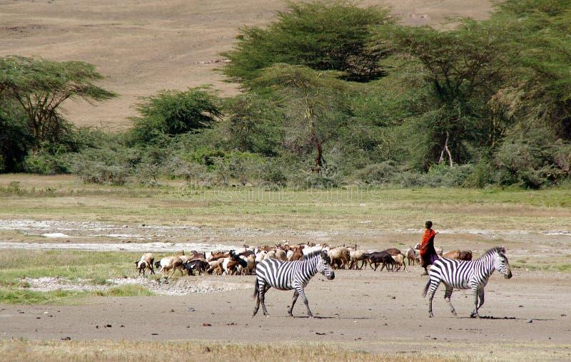 Pastor das cabras em Tanzânia imagens de stock
