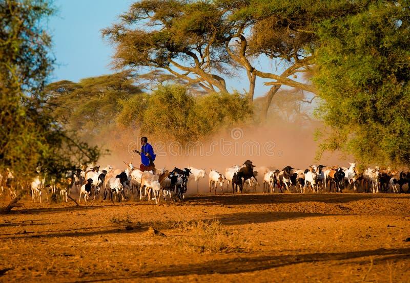 Pastor do Masai imagem de stock