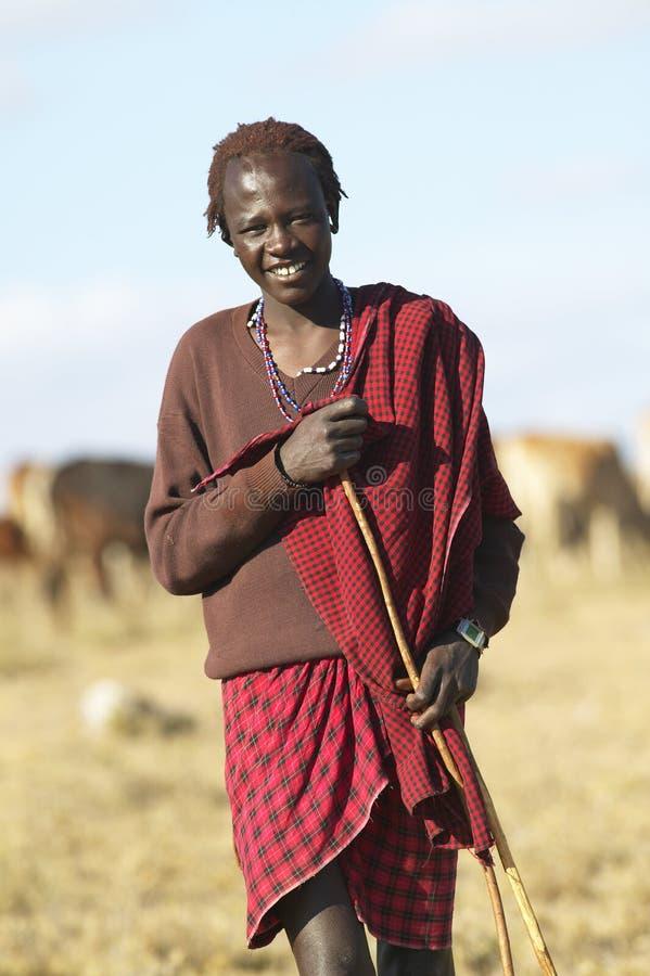 Pastor do Masai que ocupa-se de seu gado perto do parque nacional de Nairobi em Kenya, África imagem de stock royalty free