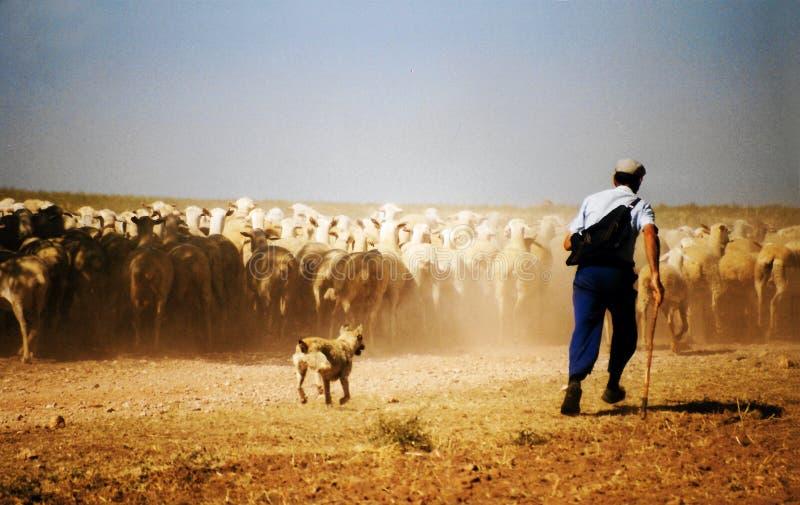 Pastor en España foto de archivo