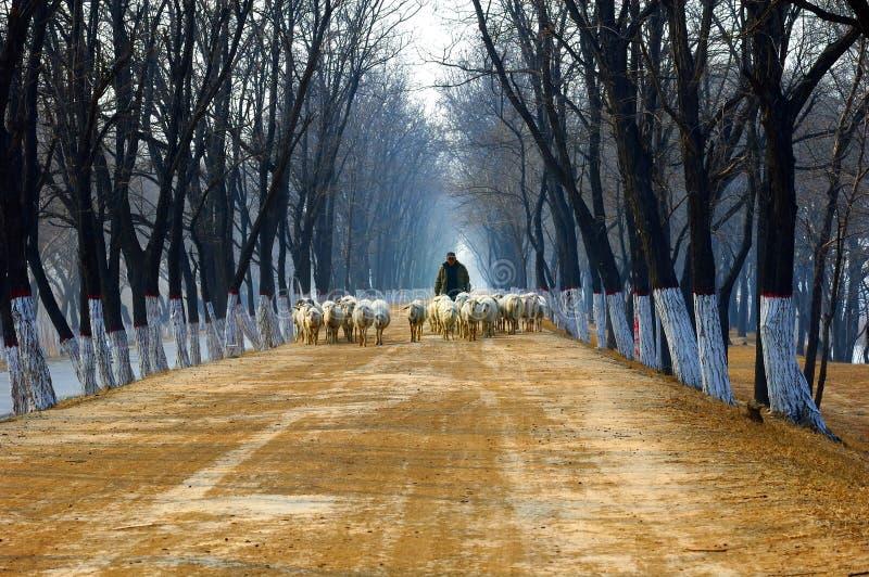 pastor na estrada secundária imagem de stock royalty free