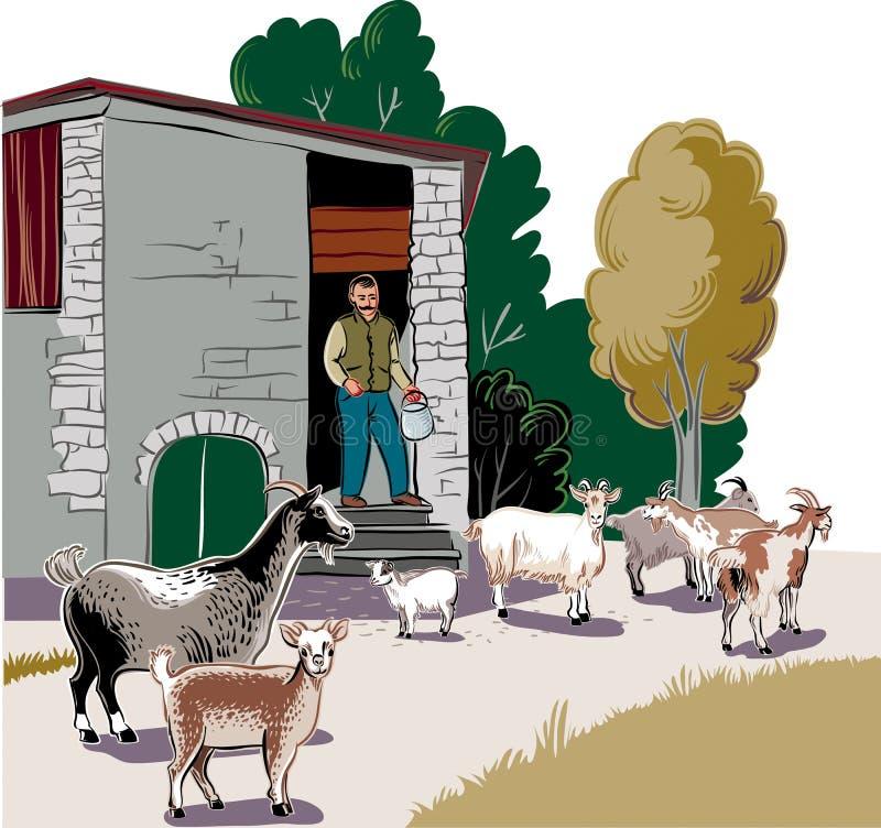 Pastor que guarda uma cubeta do leite ilustração do vetor