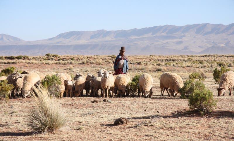 Pastor y multitud de ovejas, boliviano Altiplano imágenes de archivo libres de regalías