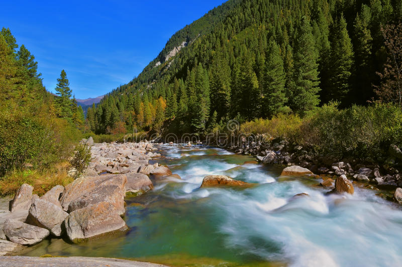 Pastoral in the Alpine mountain. Stormy and frothy mountain stream. Cascades of cold water at the source of the famous Krimml waterfalls. Pastoral in the Alpine royalty free stock photo