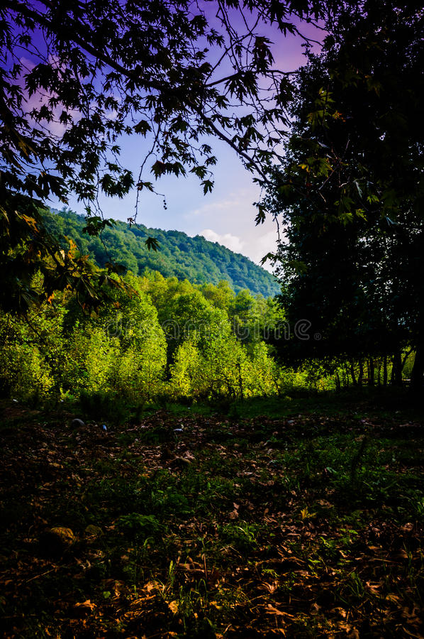 Pastoral Autumn Landscape. Pastoral landscape of Tesvikiye village in the autumn season which is a district of Cinarcik town that is also a district of Yalova royalty free stock images