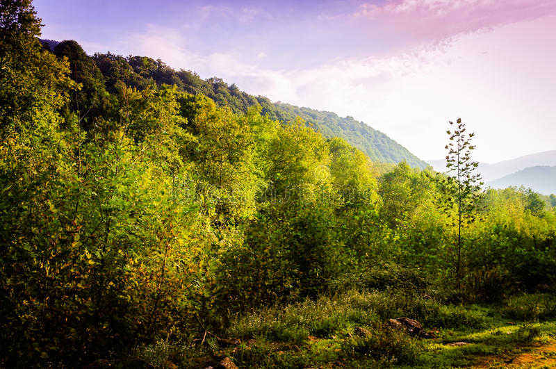 Pastoral Autumn Landscape. Pastoral landscape of Tesvikiye village in the autumn season which is a district of Cinarcik town that is also a district of Yalova royalty free stock photography