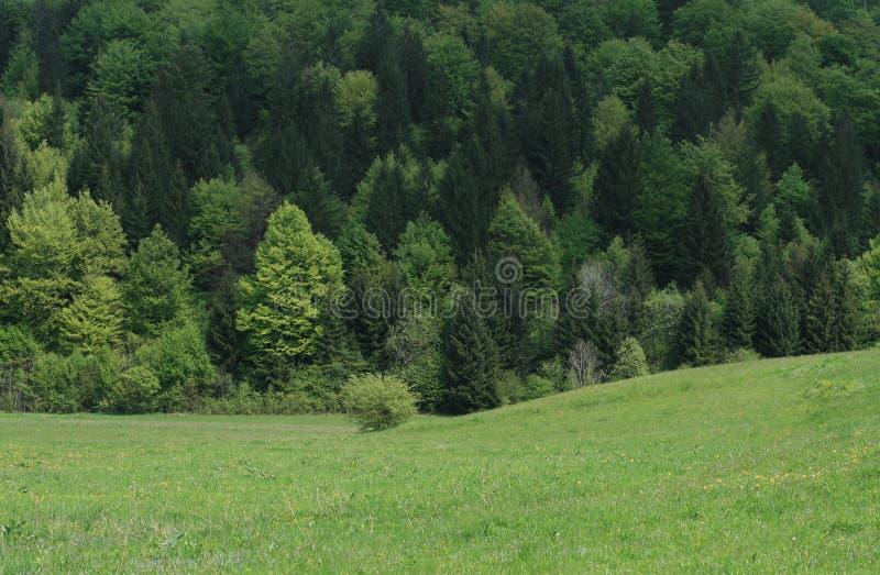 Pastoral/campo e floresta fotografia de stock
