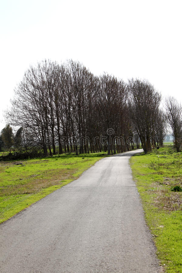 Download Pastoral Countryside Road stock photo. Image of curve - 17834112