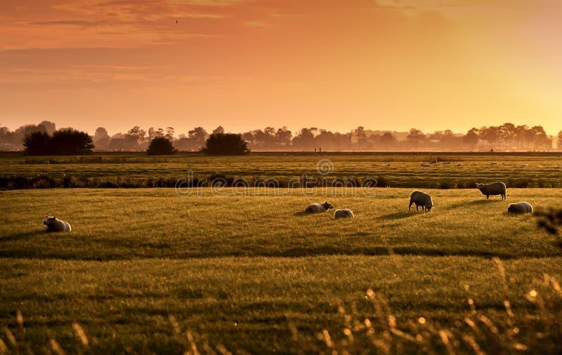 Pastoral holandés en la salida del sol fotografía de archivo libre de regalías