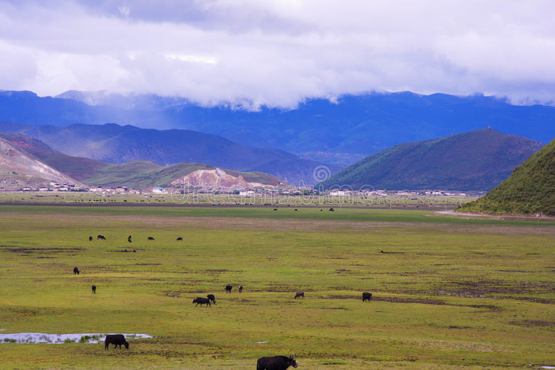 Download Pastoral scenery stock photo. Image of cows, plants, mountains - 21505254