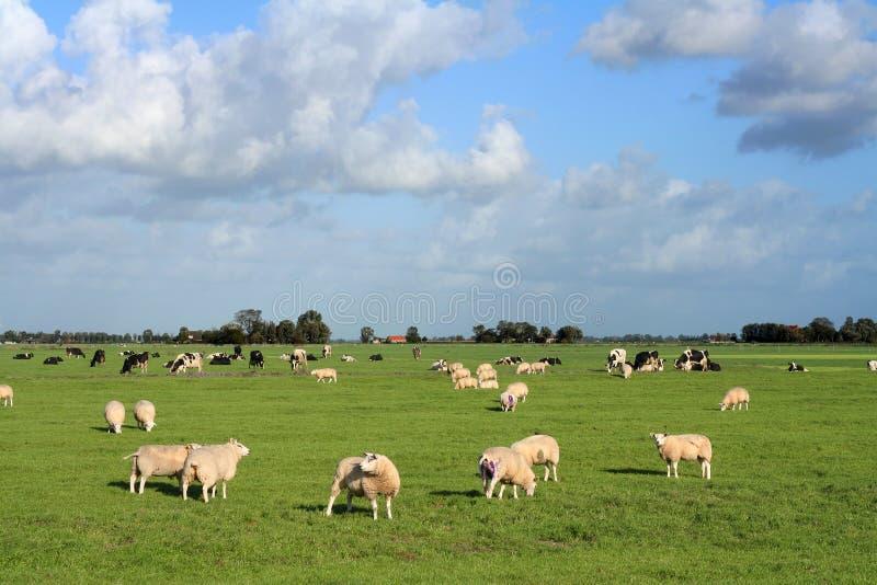Pastorale weide royalty-vrije stock foto's