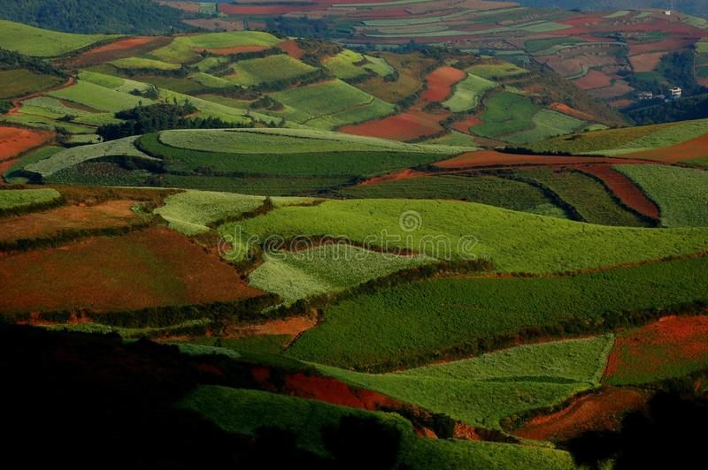 Pastoralism image libre de droits