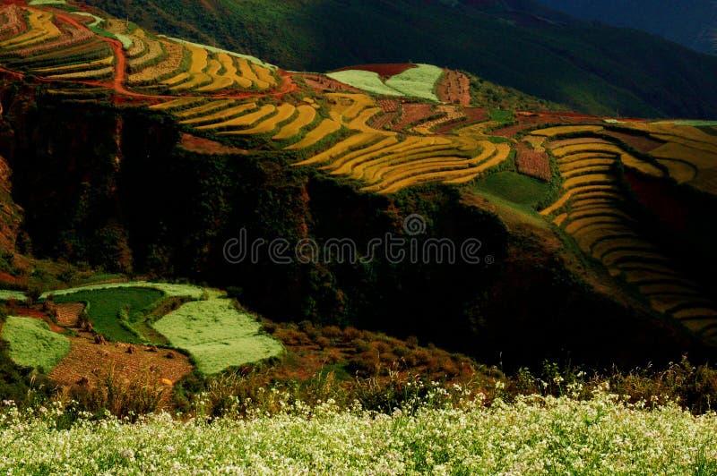 Pastoralism2 foto de stock