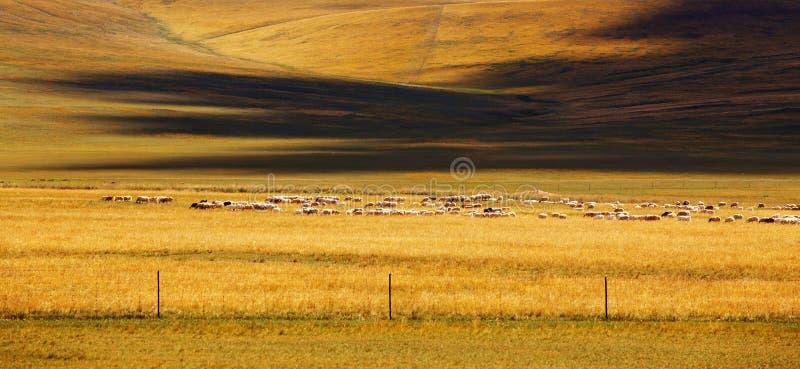 pastoralny fotografia stock