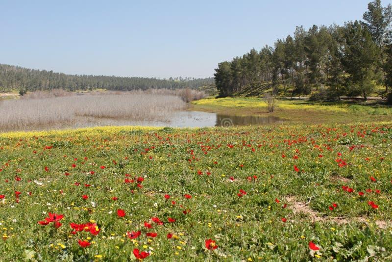Pastoralny jeziora i zieleni pola krajobraz zdjęcia stock