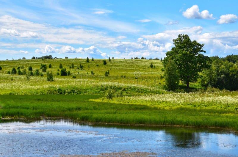 Pastoralny krajobraz lata kwiecenia pola obraz royalty free