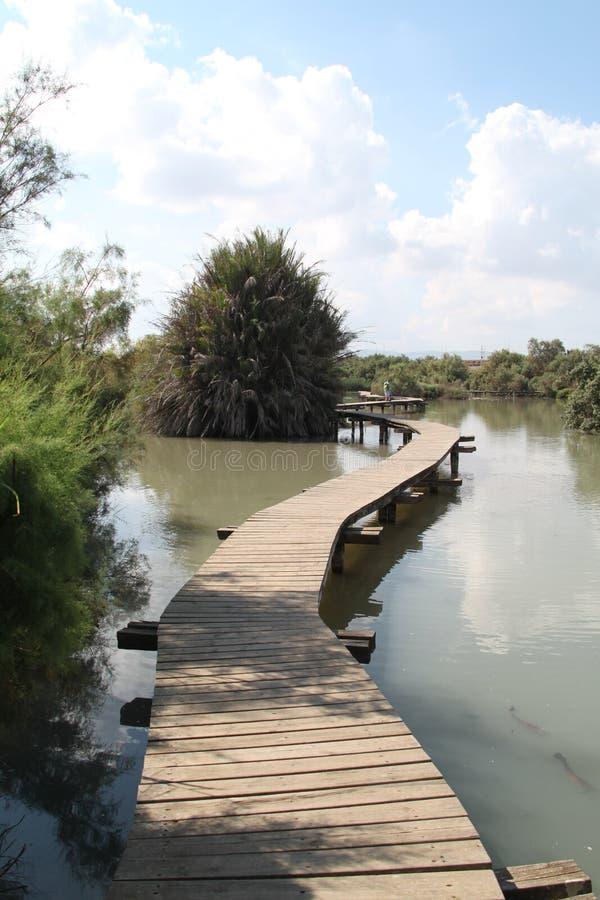 Pastoralny most nad florą i jeziorem zdjęcie royalty free