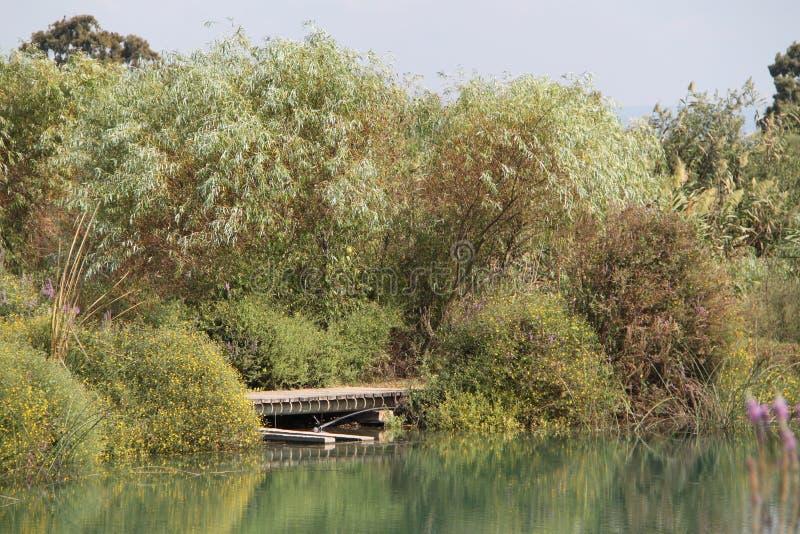 Pastoralny most nad florą i jeziorem zdjęcie stock