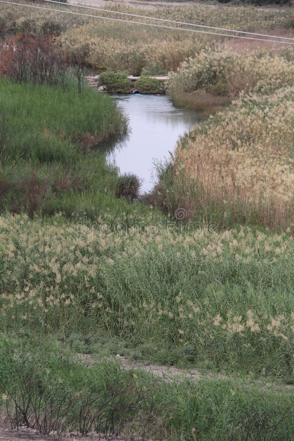 Pastoralny strumyk, dolina wiosny, Izrael fotografia royalty free