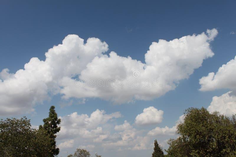 Pastoralny widok Chmurny niebo i wierzchołek drzewa zdjęcia royalty free