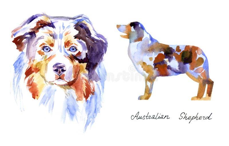 Pastore australiano dell'acquerello Cane su fondo bianco illustrazione di stock