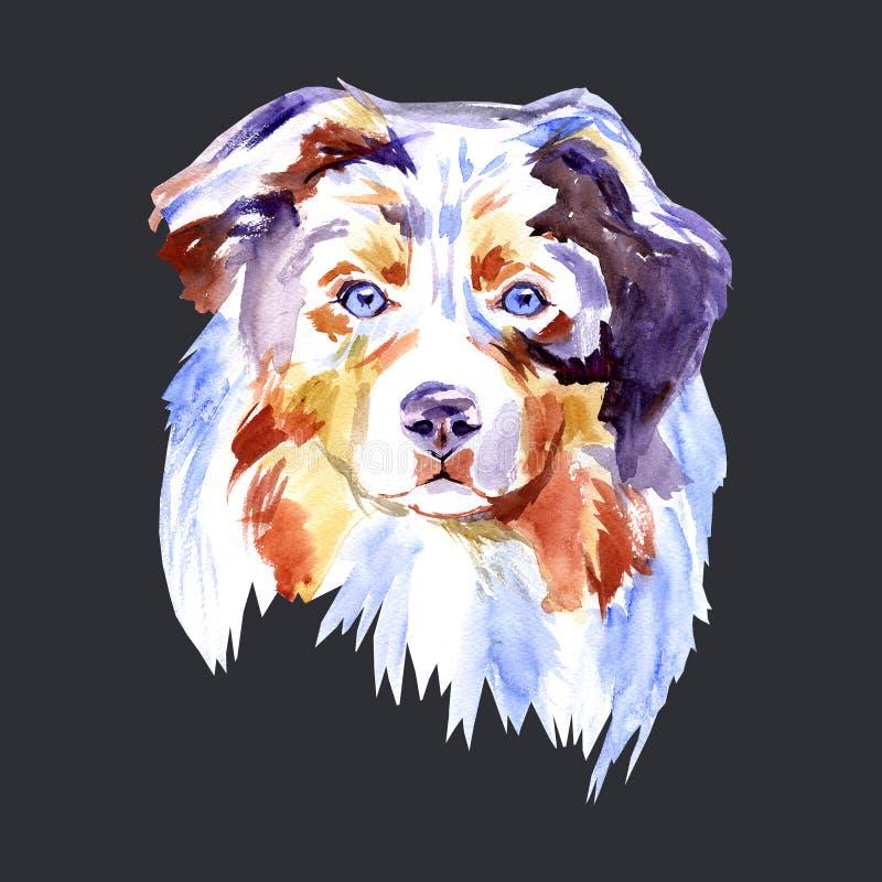 Pastore australiano della razza del cane del disegno, pittura dell'acquerello del ritratto su un fondo bianco Animale domestico d illustrazione di stock