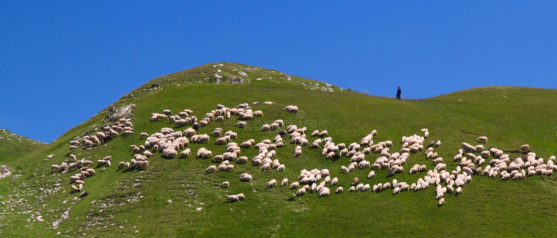 Pastore e la sua moltitudine immagini stock libere da diritti