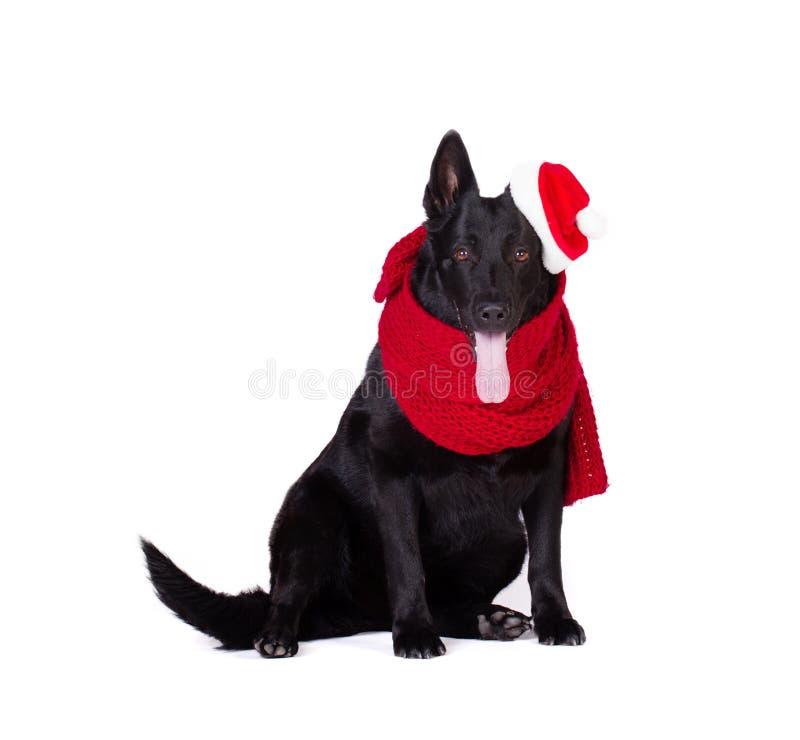 Pastore nero in abbigliamento di Santa immagini stock