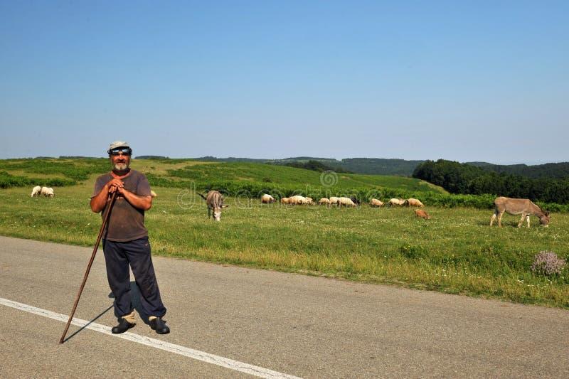 Pastore rumeno con le pecore e gli asini nella campagna fotografia stock libera da diritti