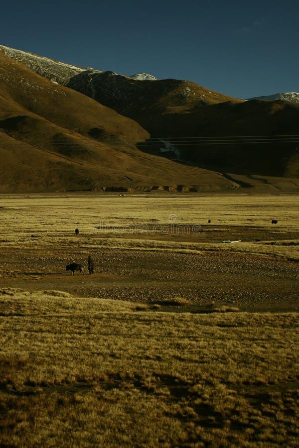 Pastore solo nel Tibet fotografia stock libera da diritti
