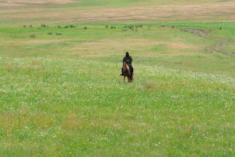 Pastore solo su un cavallo Miriadi delle margherite bianche Collina verde Stagione di estate fotografia stock