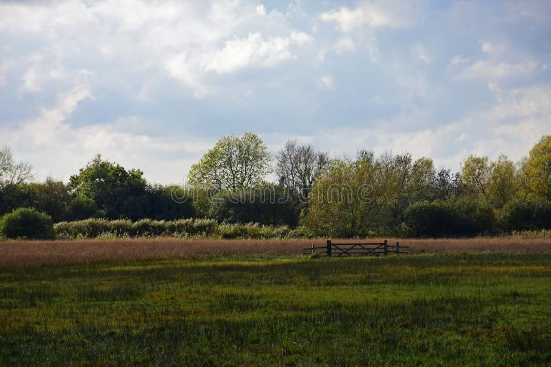 Pastorial-Ansicht, Strumpshaw-Fenn, Norfolk, England lizenzfreie stockfotos