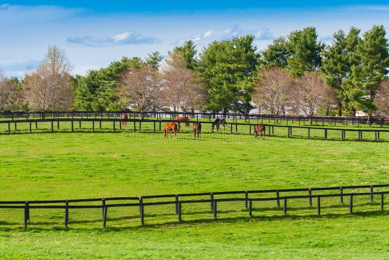Pastos verdes de las granjas del caballo Paisaje de la primavera del país imágenes de archivo libres de regalías