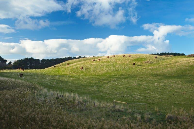 Download Pasture Stock Image - Image: 26924181