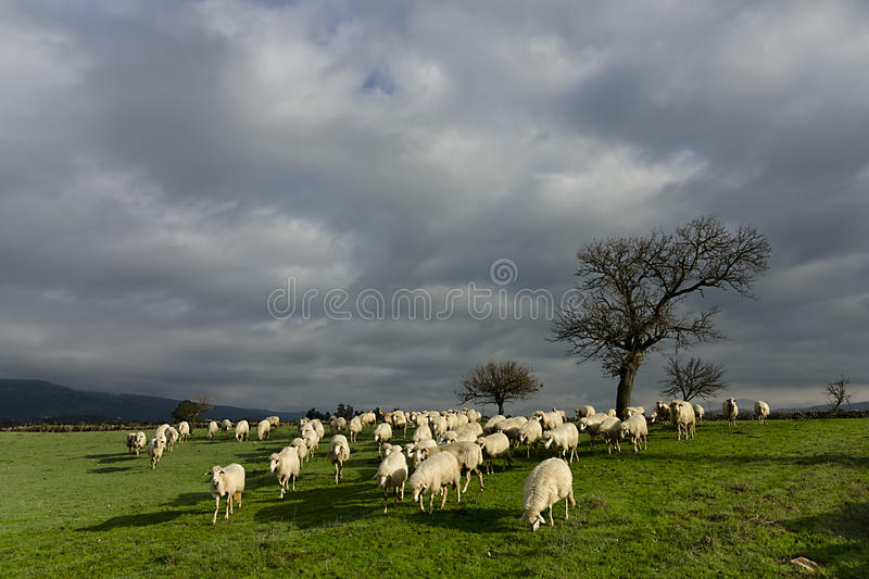 Download The pasture stock image. Image of animal, agriculture - 28750521