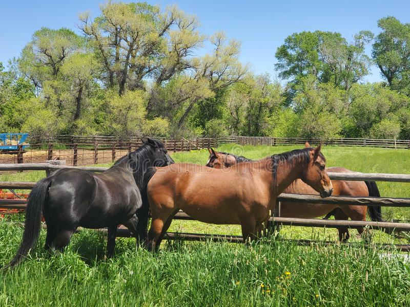 Pasture buddies royalty free stock image
