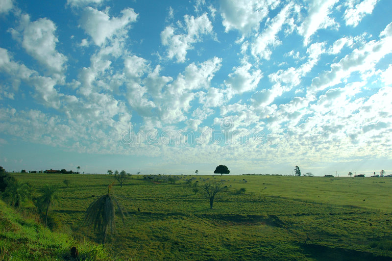 Pasture and cattle stock photography