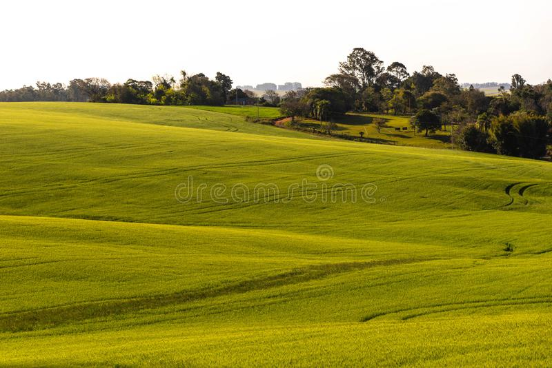 The agricultural production field in fallow 02. Pasture field in agricultural production area in the city of Cachoeira do Sul, RS, Brazil. Area of soybean stock images