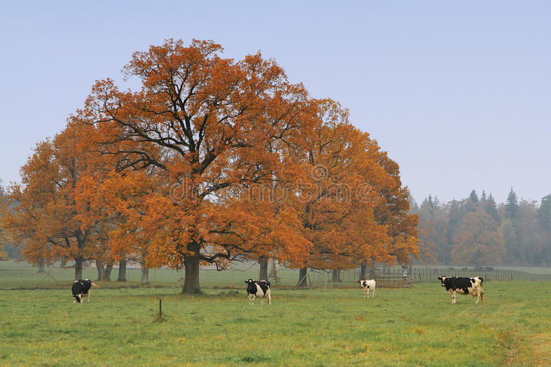 Pasture royalty free stock photography