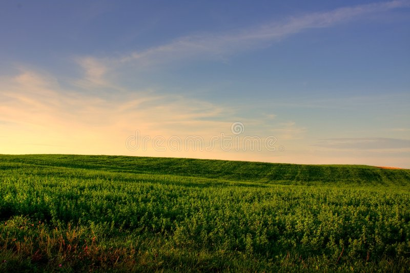 Download Pasture at Sundown stock photo. Image of clean, meadow - 6546870