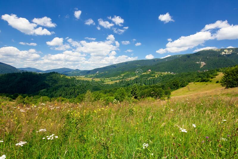 pasture on a sunny day in mountains stock photos