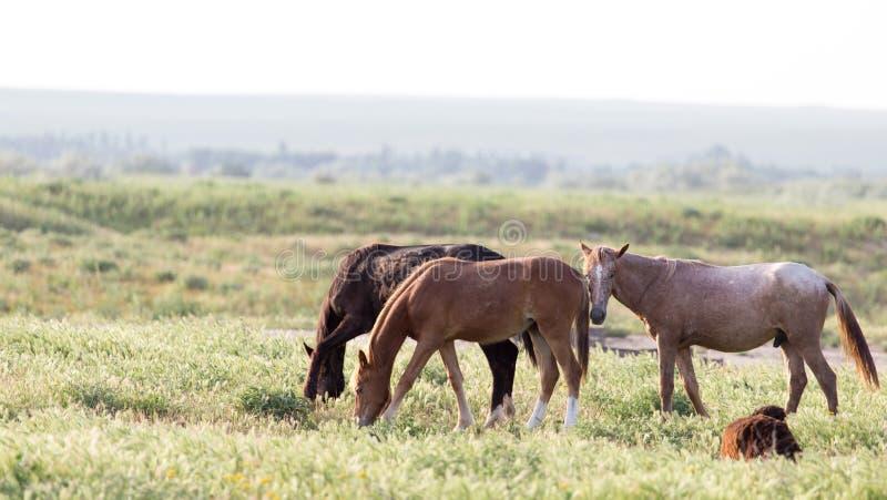 pastwiska koń obrazy royalty free