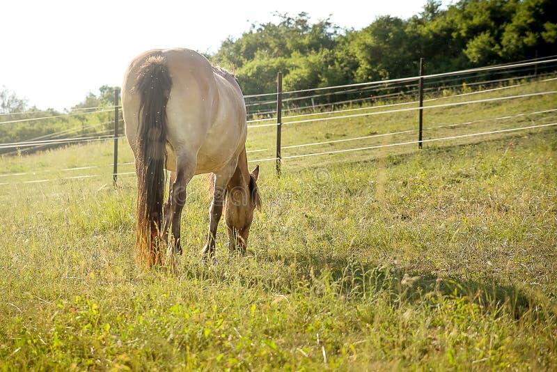 Download Pastwiska koń zdjęcie stock. Obraz złożonej z strajki - 106917116