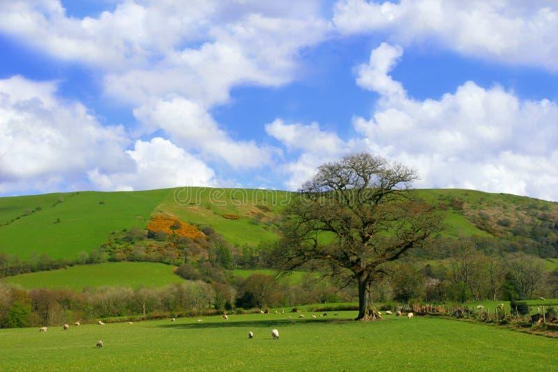 pastwiska wiosna obrazy stock