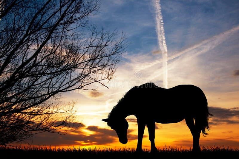 pastwiskowa końska łąka ilustracji